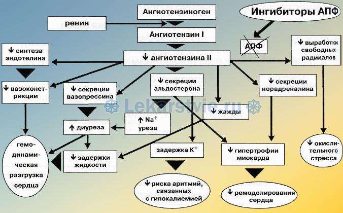 АПФ — это ангиотензин-превращающий фермент, который превращает гормон под названием ангиотензин-I в ангиотензин-II