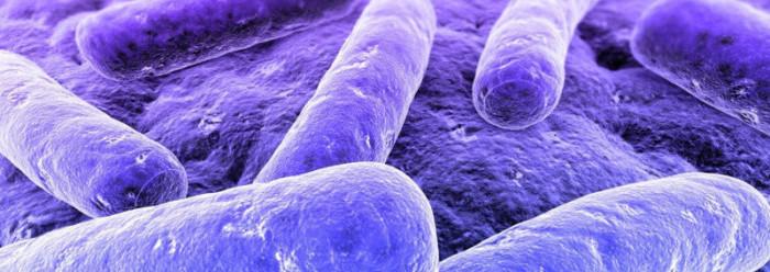 Хилак форте ускоряет выведение вредных инфекционных бактерий рода сальмонелл из организма