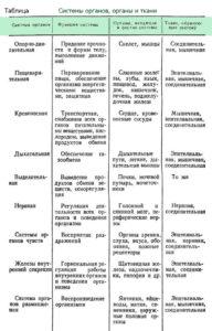 Системы органов, органы и ткани