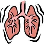 Расположение легких в теле человека