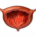 Расположение внутренних органов человека - мочевой пузырь