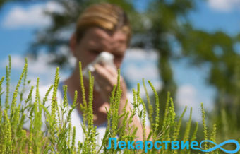 Аллергия на амброзию: как лечить в домашних условиях