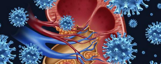 Некоторые микроорганизмы проникают в лоханки почек и вызывают воспаление