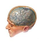 Энцефалопатия — определение и этиология заболевания, проявления и виды, основные способы лечения и профилактические меры