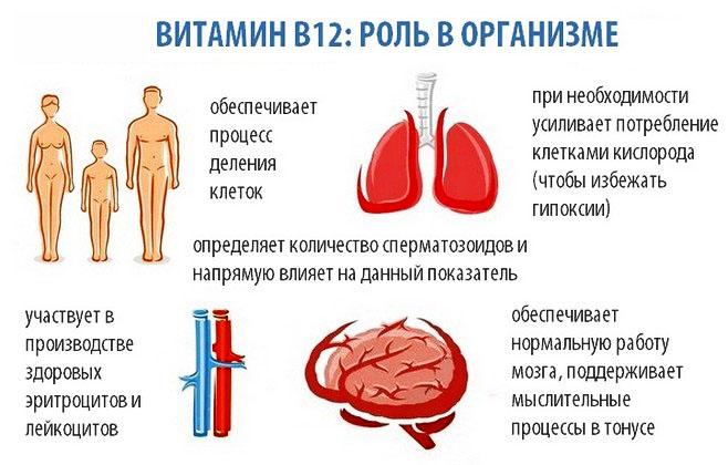 Роль витамина В12 в организме человека